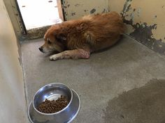 Dog Is Dumped By Family At Shelter For The Dumbest Reason