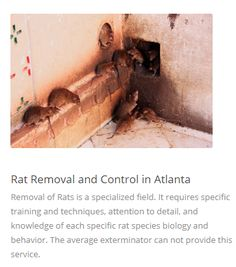 Rat exclusion is the best method of controlling the rats. But rat exclusion is not a very easy task for the #RatExclusionService providers. They need proper experience and so many tools and equipment. For more details, go to the link: https://bit.ly/2Fb7Cwb