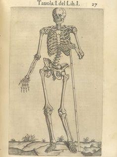 Valverde de Amusco, Juan. Anatomia del corpo humano. (Rome: Ant. Salamanca and Antonio Lafrery, 1560).