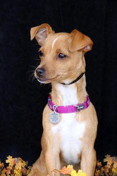 Hula/ Rescue Puppies, Hula, Pitbulls, Dogs, Animals, Animales, Pit Bulls, Animaux, Pet Dogs