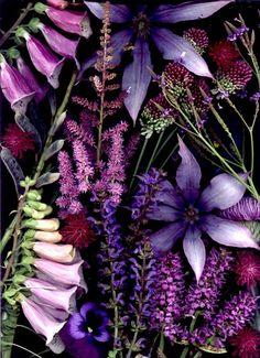 Scanned Flowers by Nancy J. Ondra