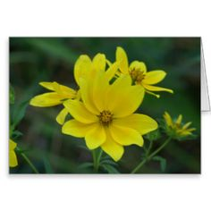 Yellow Wildflower Greeting Card. Greeting Card