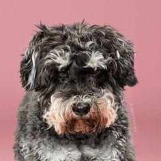 #cachorro #fotos #tosa #transformacao