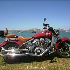 An Indian Scout motorcycle is quite an experience! Read all about it here. Big Cardboard Boxes, Best Motorbike, Widespread Panic, Wild Lion, Motorcycle Exhaust, Indian Scout, New Motorcycles, Local Police, Wildlife Park