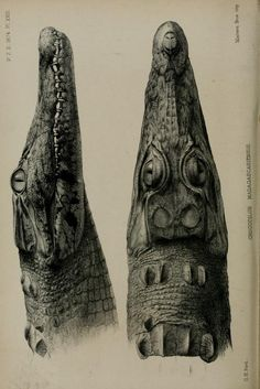 Proceedings of the Zoological Society of London, 1874.