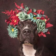 Flower Power: Pit Bulls of the Revolutionby Sophie Gamand