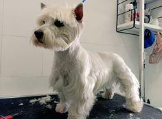 CLINICA #MASCOTAS #MONTILLA Días del baño lunes y jueves, #perros de hasta 10 kg-7€. 🐶