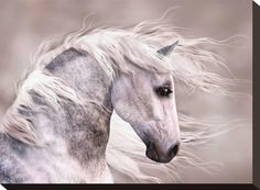 Animals Artwork Wildlife Picture Painting: White Horse Head Graphic Art Print for Wall Decor Schnauzer, Dapple Grey Horses, White Horses, Canvas Wall Art, Wall Art Prints, Horse Profile, Andalusian Horse, Horse Head, Horse Art