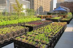 """woseph: """" portable farm -> milk crates (they moved the entire farm inside during Hurricane Irene!) Riverpark Farms NYC """" that is intense, the whole farm! The Farm, Farm 2, Urban Agriculture, Urban Farming, Urban Gardening, Plastic Milk Crates, Permaculture, Landscape Design, Garden Design"""