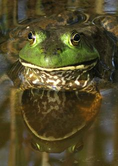 bullfrog(?) Outdoor Photography