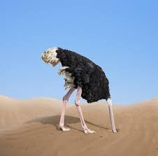Image result for meme of ostrich with head in sand | Head in the sand,  Animals, Ostriches