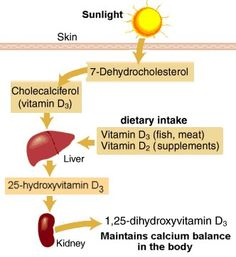 Scientists know that vitamin D deficiency is unhealthy. However, a study now suggests that too much vitamin D isn't healthy either. Vitamin A, Too Much Vitamin D, Fast Metabolism Diet, Metabolic Diet, Vitamin D Supplement, Vitamin D Deficiency, Precision Nutrition, Vitamins And Minerals, Health Problems