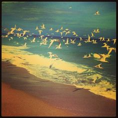 "#Seagulls in West Palm. ""I wish I was a bird, so I could fly far far away."""