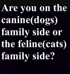 Are you on the canine or the feline family side, and why?