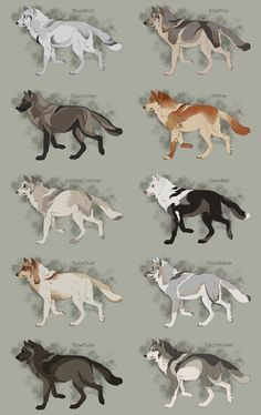 Semi-Realistic Wolf Adoptables Set 4 - CLOSED by Therbis on DeviantArt