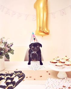 A puppy shower is a fun way to welcome the newest member of the family, and unlike a baby shower, the guest of honor gets to join in the fun! Puppy Birthday Parties, Puppy Party, Dog Birthday, Happy Birthday, Birthday Ideas, Happy 1st Birthdays, Zoella, Kawaii, Crazy Dog