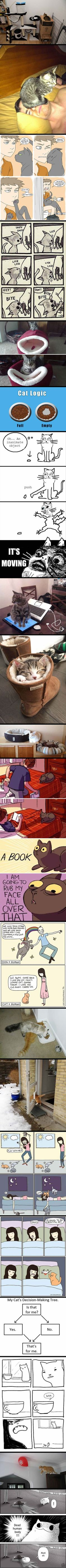 20 Best Examples Of Cat Logic