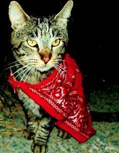 My cat Tigger. Ruby, Kailua-kona, HI. 11/8/13.