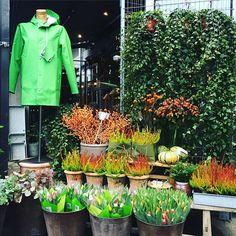 Raincoat making gardening vibrant (By Stutterheim)
