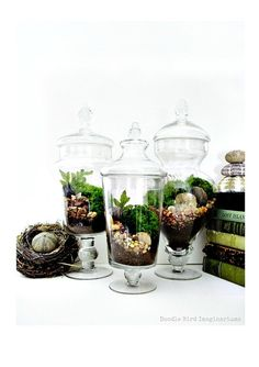 Miniature Moss Gardens (terrariums)
