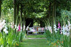 Gladiolus, Gladioli, Glads, Sword-lilies, Sword-lily, summer bulbs, spring planting bulbs, Gladiolus Charming Beauty, Gladiolus Nymph, Gladiolus callianthus Murielae,Gladiolus Butterfly Group,Gladiolus Colvillii,Gladiolus Nanus,Gladiolus The Bride,Gladiol
