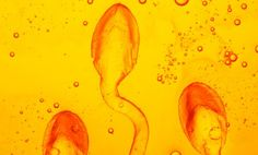 A mate's sperm can reportedly trigger chemical feelings of affection and closeness in women