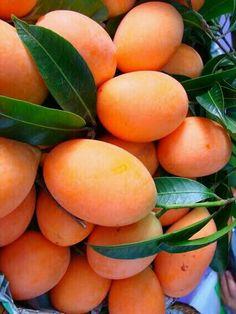 Mango Fruit, Fruit And Veg, Fruits And Vegetables, Fresh Fruit, Fruit Plants, Fruit Garden, Fruit Trees, Vegetables Photography, Fruit Photography