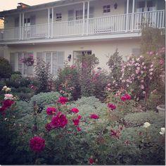Rachel Ashwell's Roses