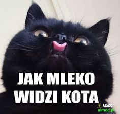 Cute Cats, Funny Cats, Good Mood, Animals And Pets, Kittens, Jokes, Lol, Humor, Pandas