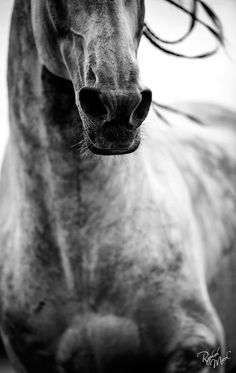 """This captures the """"nostril flare"""" that horses do when they're excited."""
