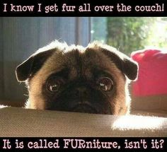 Funny Pug Dog Meme Pun LOL