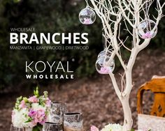 Wholesale manzanita tree branches, grapewood branches, and driftwood branches for wedding and event centerpieces and floral decorations on sale FREE SHIPPING on $99+  Koyal Wholesale is the destination for DIY brides, event planners, and florists looking for wholesale wedding and event supplies