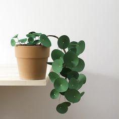 Pilea | green craft paper and chartreuse gel pen | corrie_hogg_paper_pilea2