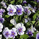 5 Essential Summer Garden Tips - iVillage