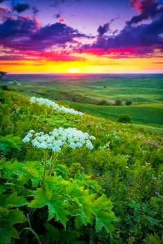 The Palouse Region, Washington