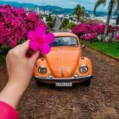 Beetle Car, Vw Beetles, Wallpaper, Wheels, Cars, Vw Bugs, Wallpapers, Bubbles