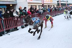 The Reindeer Sprints in Rovaniemi: held in the middle of the city. This sprint race is held every March.