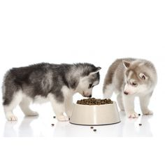 Canine Nutrition Diploma Course  (use voucher code PIN29 at checkout!).