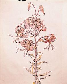 Tiger Lily Botanical by Beatrix Potter Beatrix Potter, Botanical Flowers, Botanical Prints, National Art, Japanese Flowers, Botanical Drawings, Art Drawings, Flower Drawings, Floral Watercolor