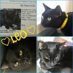 URGENT CATS - Urgent Cats of Tampa Bay
