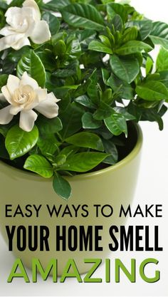 If you're wondering how to make your house smell good, here's help! Several simple ideas you can use right away to make your house smell great. House Smell Good, House Smells, House Cleaning Checklist, Cleaning Tips, Cleaning Schedules, Best Indoor Plants, Indoor Flowering Plants, Indoor Flowers, Indoor Garden