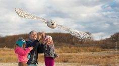 Blue Hills Trailside Museum Owls Program Boston, Massachusetts  #Kids #Events