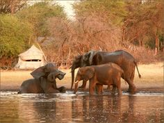 The Hide Lodge - Elefanten am Wasser
