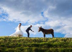 Random Donkey shot with Bride & Groom - Salt Studios Corporate Headshots, Commercial Photography, Donkey, Bride Groom, Studios, Salt, Wedding Photography, Random, Animals