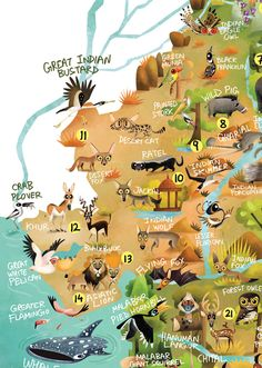 115 animals, 46 biodiversity hotspots, one giant illustration- here is the Wildlife Map of India, out on Green Humour to mark the Wi. India Map, India India, Indian Animals, Wildlife Of India, Life Map, History Of India, Animal Science, Pokemon, Animal Posters