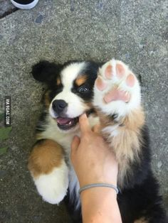 Jelly bean toes (version: dog)