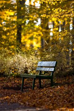 Beautiful bench in the trees. Nice place to sit and relax or meditate.