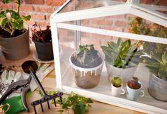 Helemaal hip, een terrarium op tafel, het kan met de SOCKER plantenkas. #IKEA