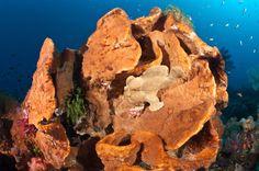 camouflage ocean animals - Google 검색