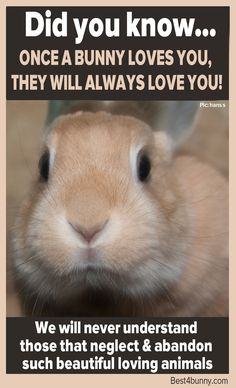 Did you know... Once a bunny loves you, they will always love you…